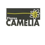 FLORES CAMELIA